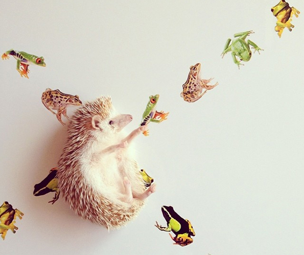 Darcy-the-Flying-Hedgehog-5