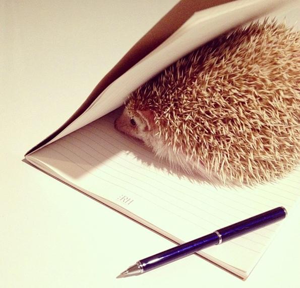 Darcy-the-Flying-Hedgehog-6