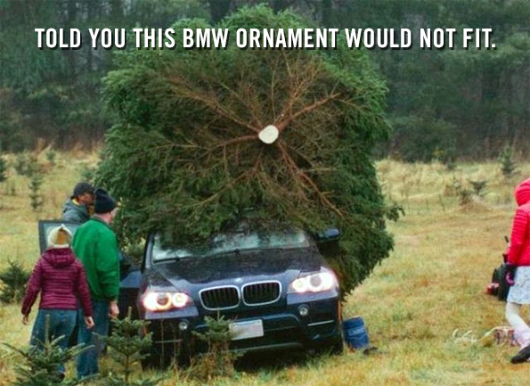 caption-this-tree-winner