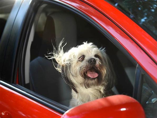 dogs-car-window-3