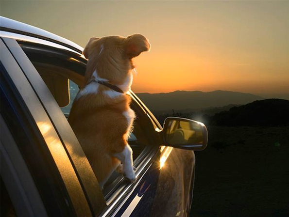 dogs-car-window-6