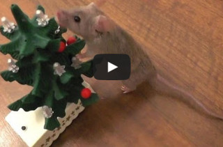 Mouse Decorates Xmas Tree