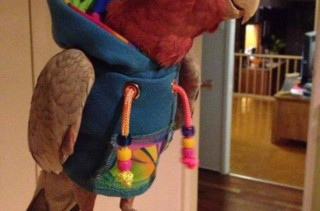 A Parrot In A Hoodie