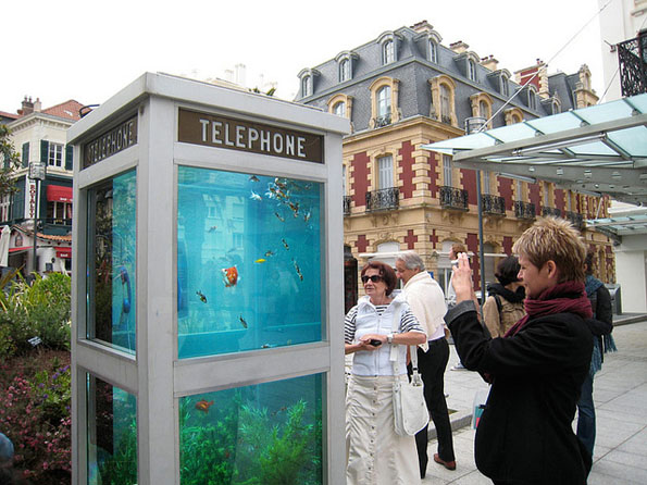 phone-booth-fish-tank-aquarium-2