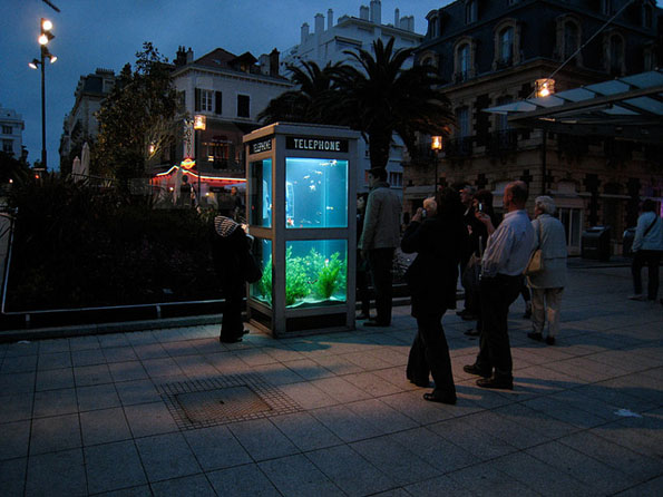 phone-booth-fish-tank-aquarium-3