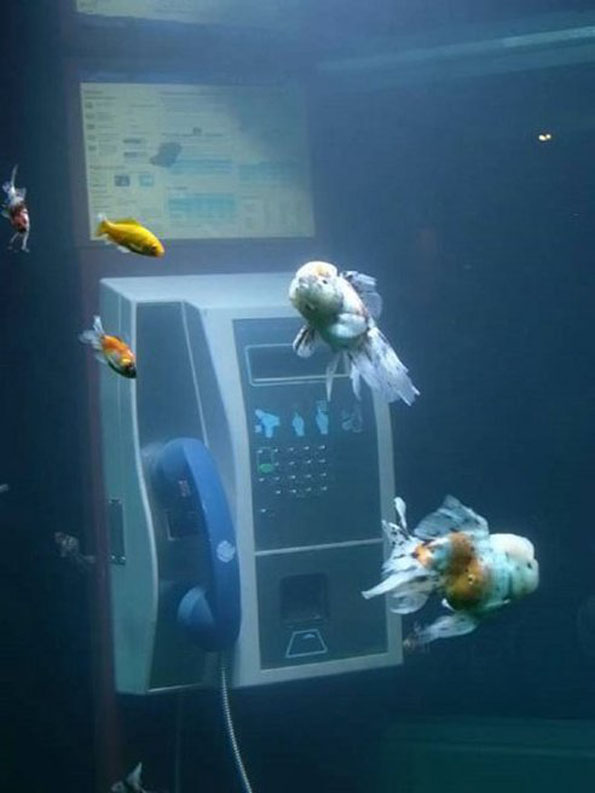phone-booth-fish-tank-aquarium-4