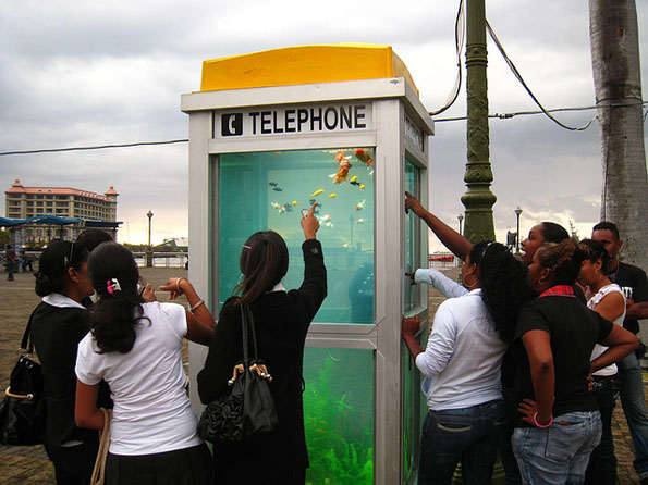 phone-booth-fish-tank-aquarium-5