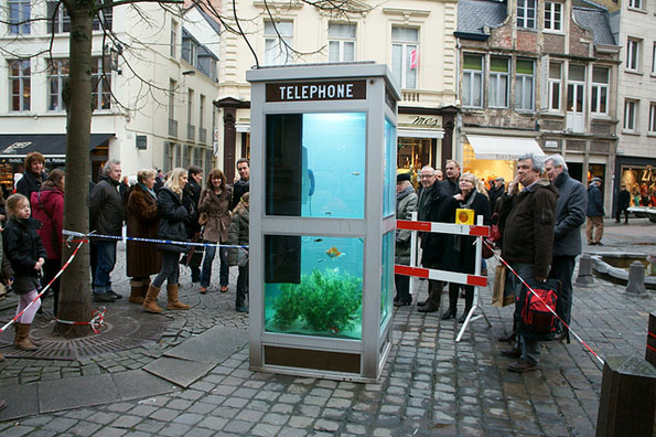 phone-booth-fish-tank-aquarium-6
