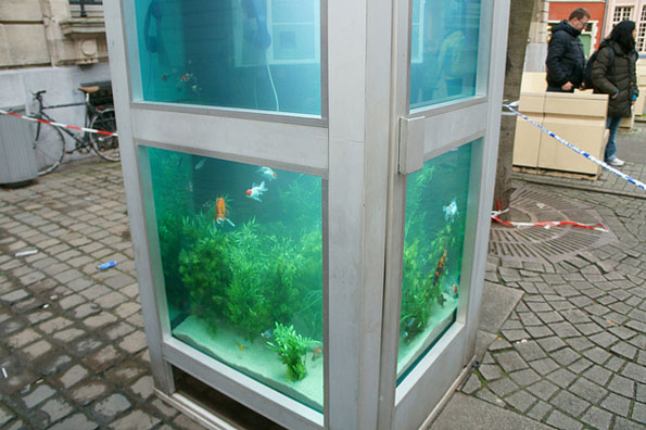 phone-booth-fish-tank-aquarium-7