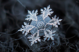 Don't Miss These Incredible Macro Photos of Snowflakes