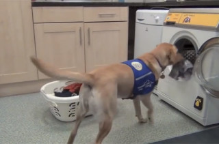 Assistance Dogs Can Do Laundry