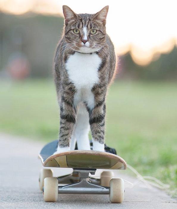 Didga-cat-riding-skateboard