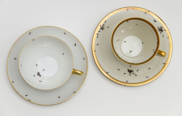 Porcelain-covered-with-ants-6