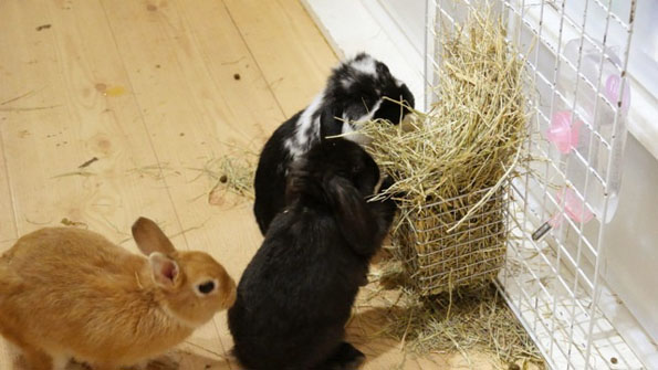 bunny-rabbit-cafe-japan-10