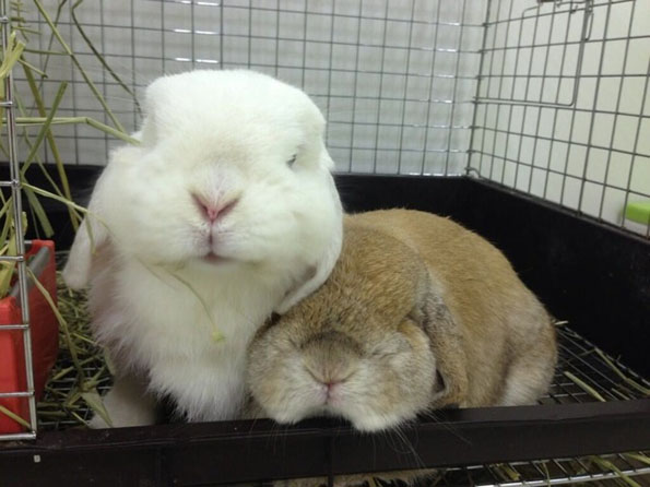 bunny-rabbit-cafe-japan-13