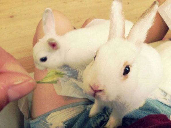 bunny-rabbit-cafe-japan-14
