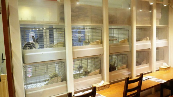 bunny-rabbit-cafe-japan-5