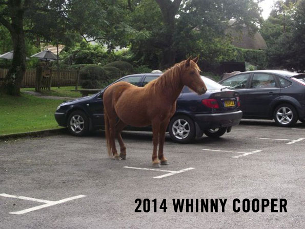 caption-this-horse-parking-winner