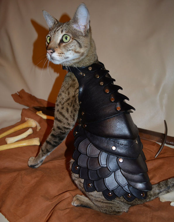 Battle Armor For Cats
