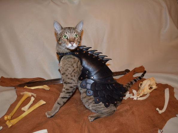 cat-battle-armor-2
