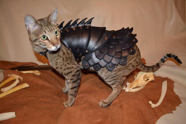 cat-battle-armor-3