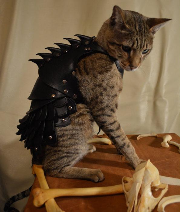 cat-battle-armor-5
