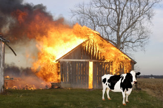Cows Farting Causes Barn Explosion