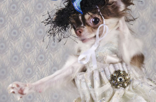 Dogs In High End Couture