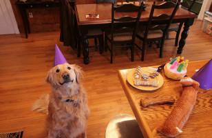 Golden Retrievers Celebrating Birthdays