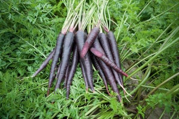 purple-carrots-2