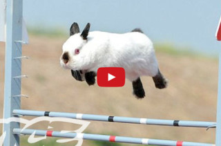 Bunny Shows Are The New Dog Shows