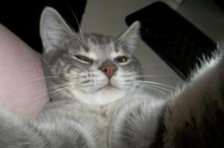 App Makes Cat Selfies Easy!