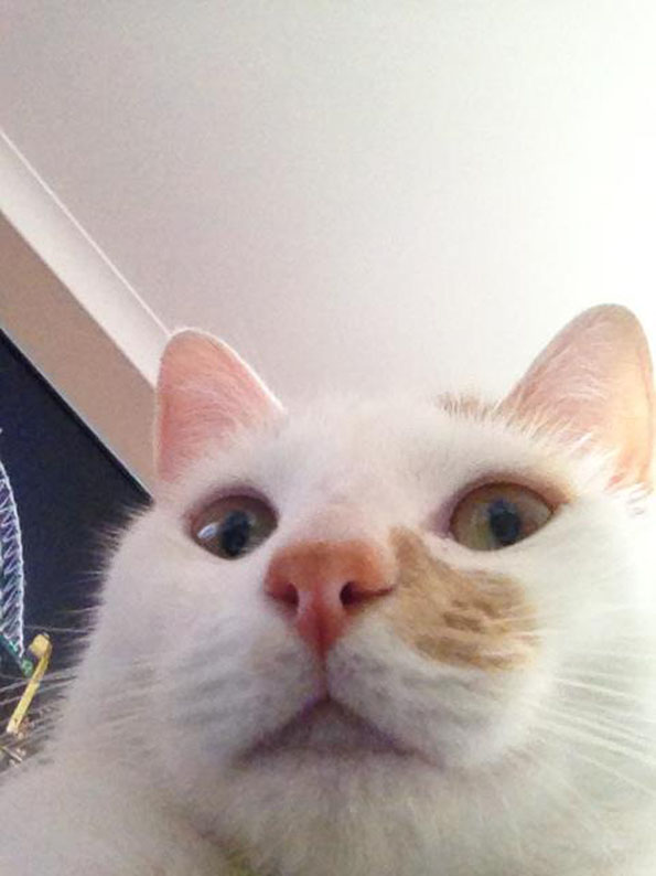 cat-selfies-3