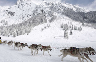 Dog Sled Taxi Service