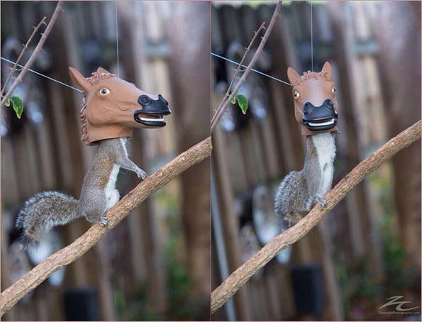 horse-head-squirrel-feeder