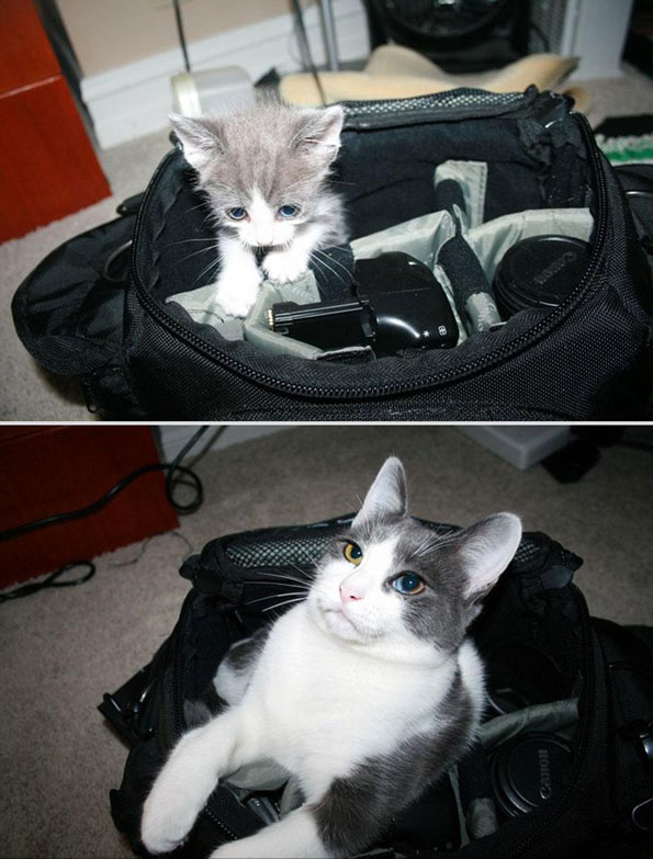 pets-before-after-10