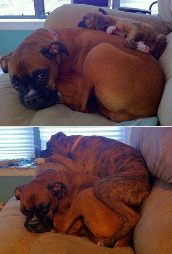pets-before-after-12