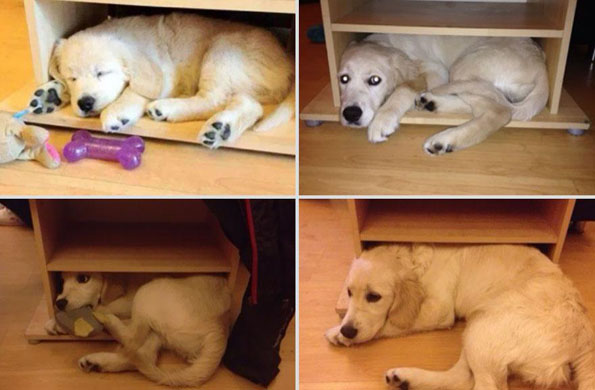 pets-before-after-18