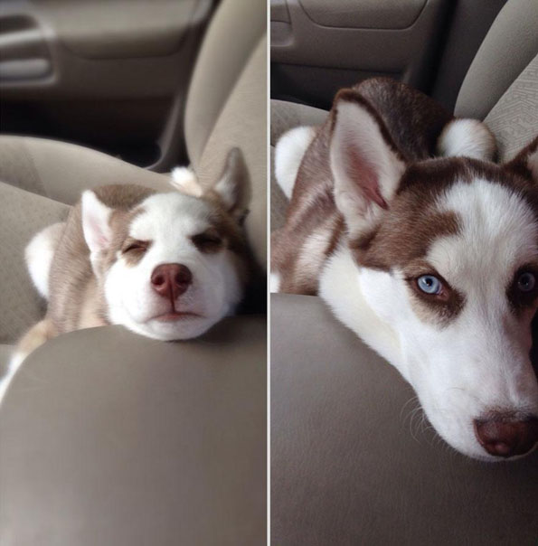 pets-before-after-4