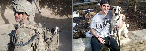 pets-before-after-9