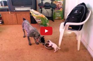 Little Dog Vs Big Dog: Food Edition