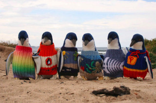 Penguins In Sweaters Will Make You Happy