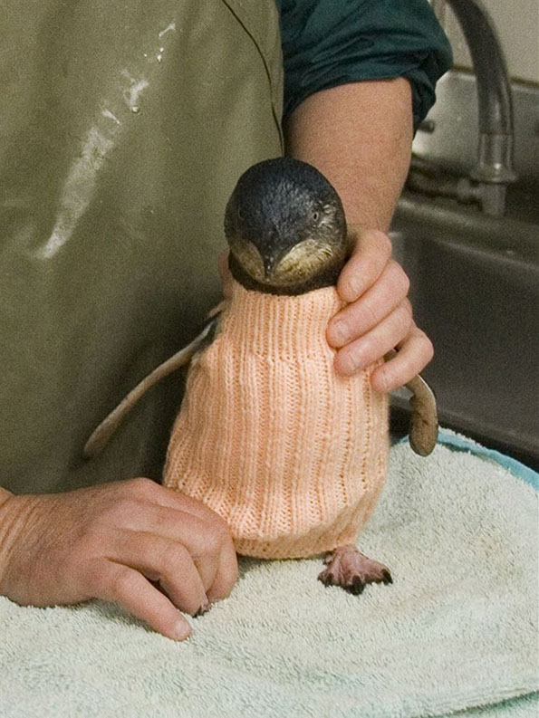 penguin-sweaters-3