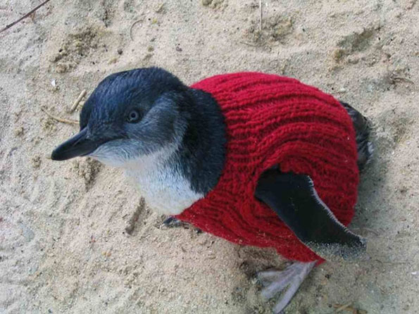 penguin-sweaters