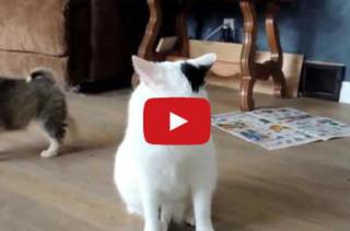 What Are This?: Pups Investigate Cat