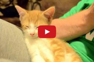 Sleepy Kitten Can't Stay Awake