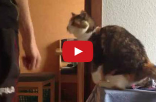 Cat Greets Her Human In A Unique Way