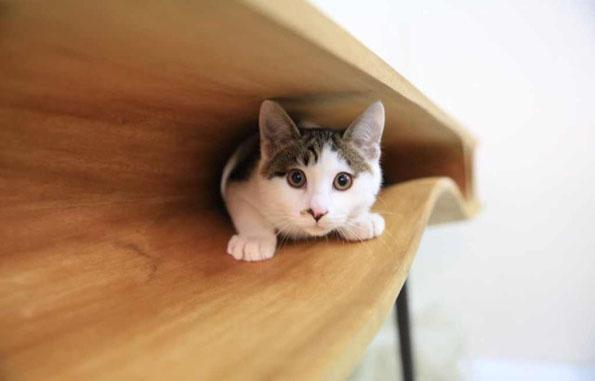 cat-table-desk-3