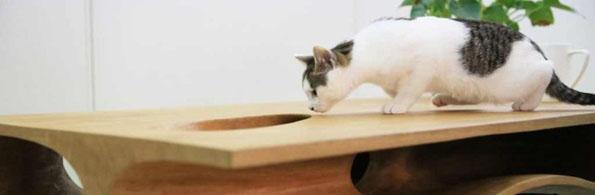 cat-table-desk-4