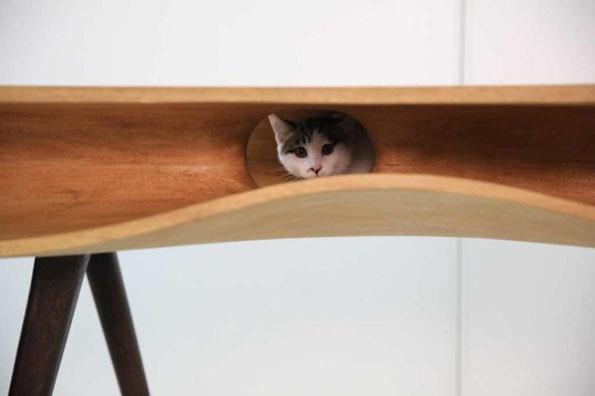 cat-table-desk-5